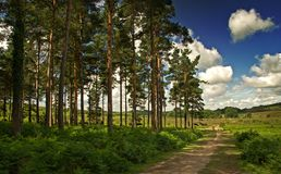 Bord du bois Image libre de droits