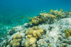 Bord du récif Photographie stock libre de droits
