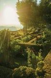 Bord et buissons feuillus dans un jardin fleuri sur le cr?puscule photos libres de droits