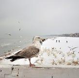 bord seagull συνεδρίαση ξύλινη στοκ φωτογραφία με δικαίωμα ελεύθερης χρήσης
