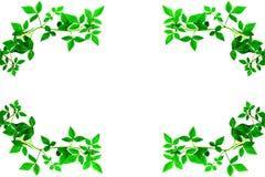 Bord vert de congé Photographie stock libre de droits