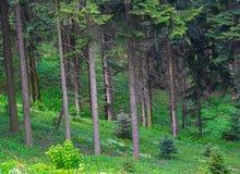 Bord vert de forêt Photo stock