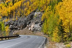 Borda da estrada Aspen foto de stock royalty free