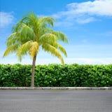 Borda da estrada e árvore Imagens de Stock