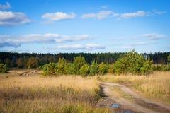 borda da floresta Imagem de Stock