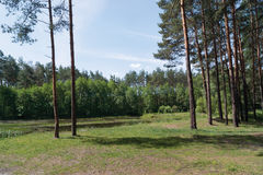 borda da floresta foto de stock