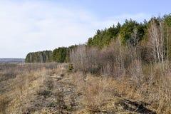Borda da floresta de conífero e de árvores de folhas mortas com um campo da vegetação seca no primeiro plano fundo, paisagem fotos de stock royalty free