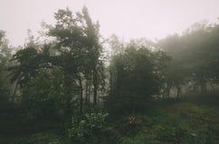 Borda da floresta no dia nevoento Imagens de Stock