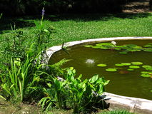 Borda da lagoa Foto de Stock Royalty Free