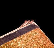 Borda da tampa do livro velho Foto de Stock