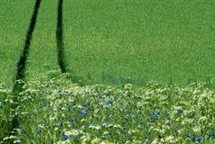 borda de um campo da colheita imagens de stock royalty free
