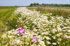 Borda do campo com wildflowers coloridos Fotografia de Stock Royalty Free
