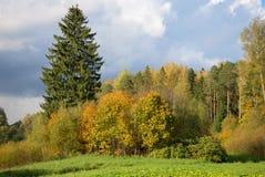Borda do dia nebuloso de outubro da floresta do outono Rússia fotos de stock