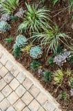 Borda do jardim Fotografia de Stock