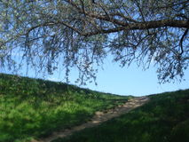 A borda superior e o vimeiro do monte ramificam no céu azul na mola Fotos de Stock