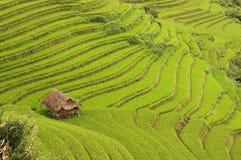 Bordadura da cabana por terraços do arroz Fotos de Stock Royalty Free