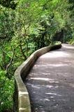 Bordadura do trajeto da curva com planta verde Imagem de Stock Royalty Free