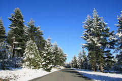Borde de la carretera del invierno Fotos de archivo