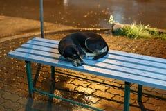 Borde de la carretera del perro Foto de archivo libre de regalías