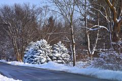 Borde de la carretera sutil del invierno fotografía de archivo libre de regalías