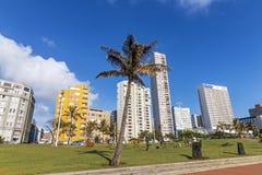 Borde de la palmera y de hierba contra el paisaje urbano azul de Coudy Imagen de archivo libre de regalías