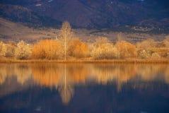 Borde de oro del lago en otoño foto de archivo