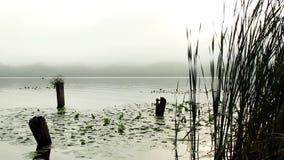 Borde de una bahía pantanosa metrajes