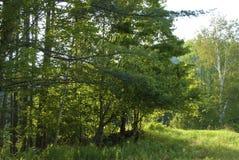 Borde del bosque Fotografía de archivo