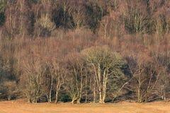 Borde del bosque de hojas caducas en invierno Imágenes de archivo libres de regalías