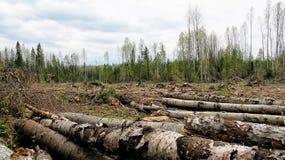Borde del bosque después de madereros Foto de archivo libre de regalías