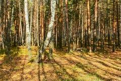Borde del bosque en un día soleado del otoño Foto de archivo libre de regalías