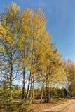 Borde del bosque del otoño Imagen de archivo libre de regalías