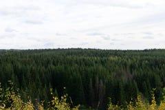 Borde del bosque visto de meseta alpina despejada fotos de archivo