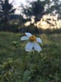 Borde del camino de la flor Fotografía de archivo libre de regalías