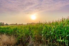 Borde del campo de maíz de Mayenne imagenes de archivo