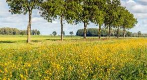 Borde del campo floreciente en un paisaje holandés Fotografía de archivo libre de regalías