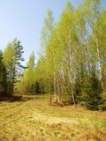 Paisaje de la primavera en Rusia central Fotos de archivo libres de regalías