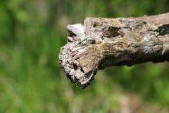 Borde dentado roto del registro viejo del árbol rodeado con el fondo verde de las hojas en jardín local foto de archivo