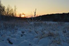 Borde Nevado de la salida del sol de la mañana del bosque del invierno Imagen de archivo libre de regalías