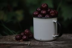 Bordea cherry in enameled mug royalty free stock photos