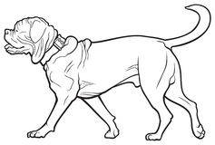 Bordeaux dog breed Stock Images
