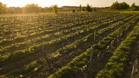 Bordeaux för flyg- sikt vingård Aquitaine, Frankrike arkivbild