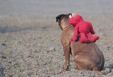 Bordeaux mastiff Stock Photography