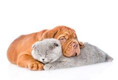 Bordeaux puppy hugs sleeping cat. isolated on white background Stock Photo