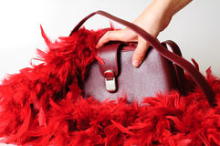 Bordeaux purse and red fethers Royalty Free Stock Images