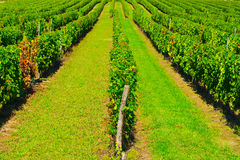 Bordeaux Stock Photo