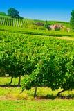Bordeaux Stock Images