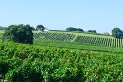 Bordeaux Stock Photography