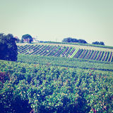 Bordeaux Royalty Free Stock Photo