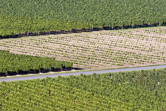 Bordeaux Vineyard Royalty Free Stock Photos
